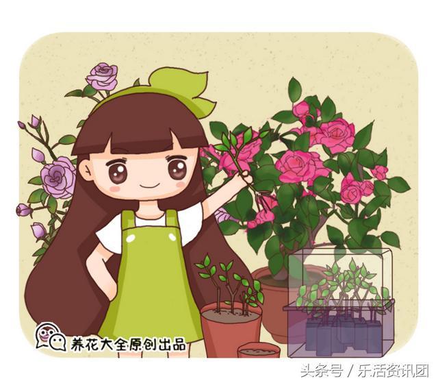 海棠品种,常见的9种海棠,各种不重样,样样美翻天