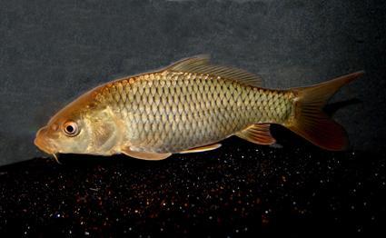 鱼品种,教你区分常见的10种鱼,再也不做一无所知的吃货
