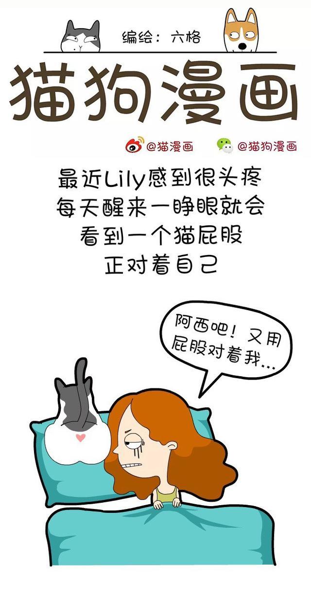 菊漫画,猫狗漫画:猫咪总把菊花对着你,是因为你丑吗……