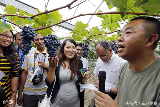 达人简介,来自一线的5位葡萄种植达人,各自独家绝技,看后少走3年弯路!