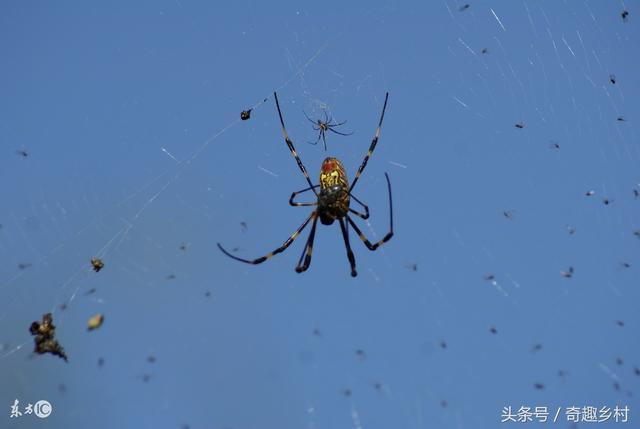 蜘蛛的寓意,什么样的蜘蛛是喜蜘蛛?喜蜘蛛报喜准吗?不小心杀死了怎么办?