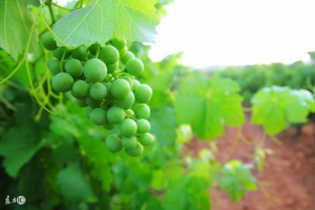 绿色营销,国外绿色农产品营销的特点及对我国的启示
