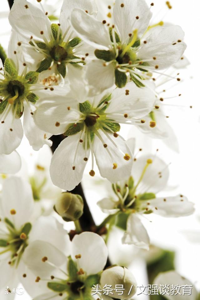 初一生物《开花和传粉》教案,学到你就赚了!