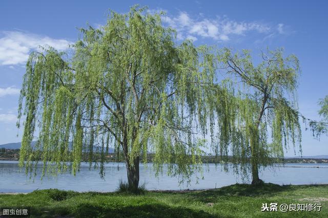 柳字的诗,八首杨柳诗五种相思情