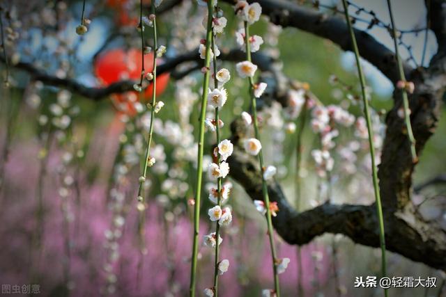小白花的做法,春暖花开之际,吃花正是当时,浪漫,雅致,又美味