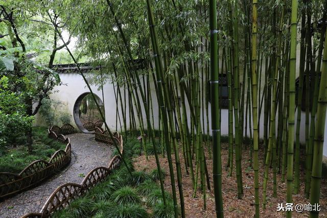 喻的诗,为何说做人当如竹?来诗词里给你答案