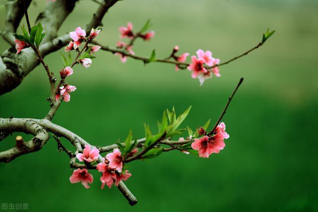 关于大自然的诗,清新自然,高贵妩媚,这首写春风的小诗,被认为最是动人心魄