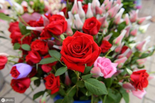 情人节表白最浪漫的话,七夕情人节表白情话大全,浪漫甜蜜,总有一句撩到你