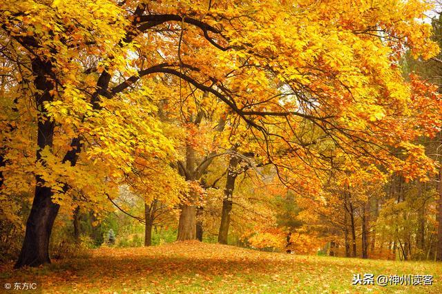 描写公园的句子,诗歌:游太原迎泽公园感怀散句