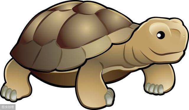 养龟为什么不能养双,养乌龟是养一只还是多只好?乌龟吃什么饲料呢?
