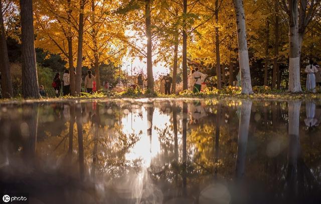 关于秋天的诗,最著名的秋天诗词十首,谁才是秋思之祖?