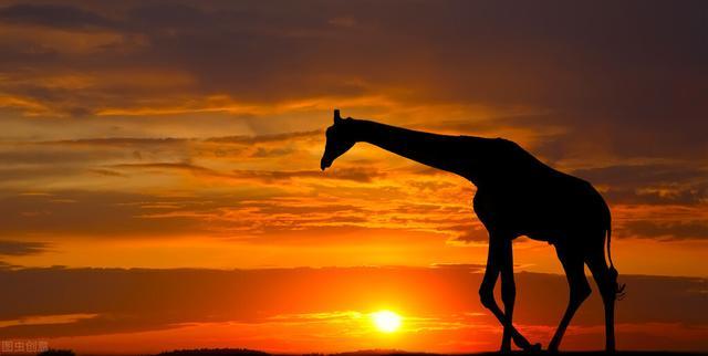 鹿的句子,一头麋鹿,穿古越今,牵撮着我们的心魂,也映射着我们的历史