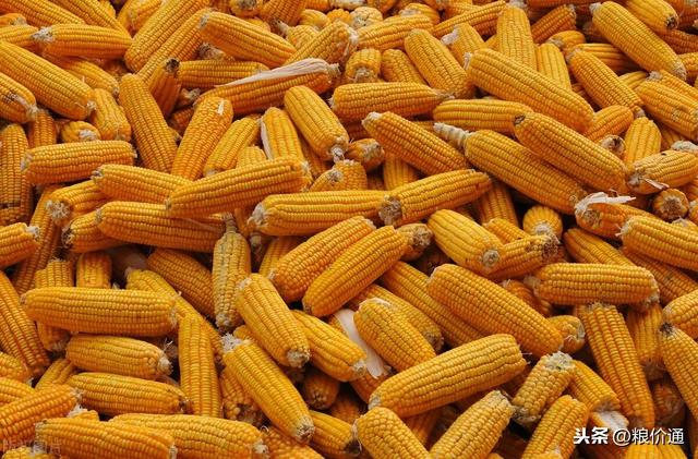 玉米行情开关门暴涨,充足说明3个用意