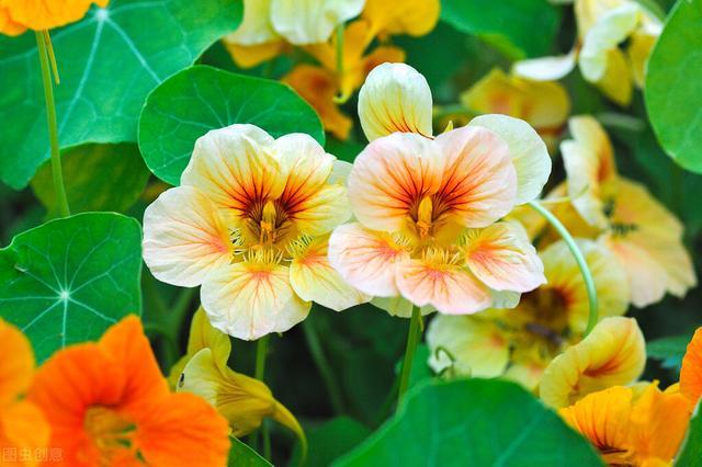 春暖花开,100种常见园林植物美极了,赏花必备,收藏了