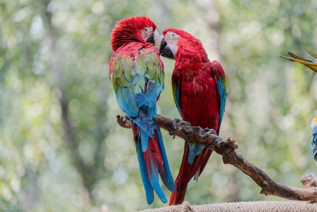 稀有品种,北京市野生动物园中,稀有品种的鹦鹉真不少,看看你能认识几种?