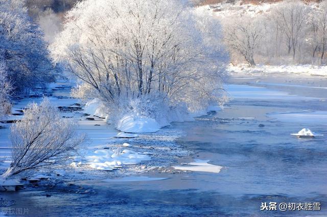贾岛的诗,冬日寒柳三首,真正的冬柳,不畏风雪,梢梢寒柳出疏篱