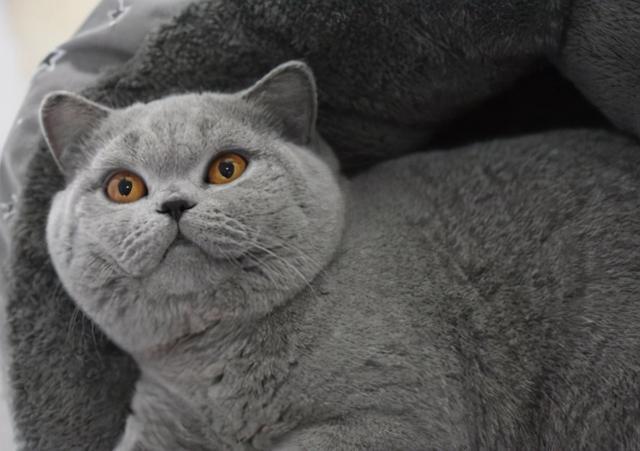 """什么品种的猫,工资再低也要买!今年超火的""""6种猫咪"""""""