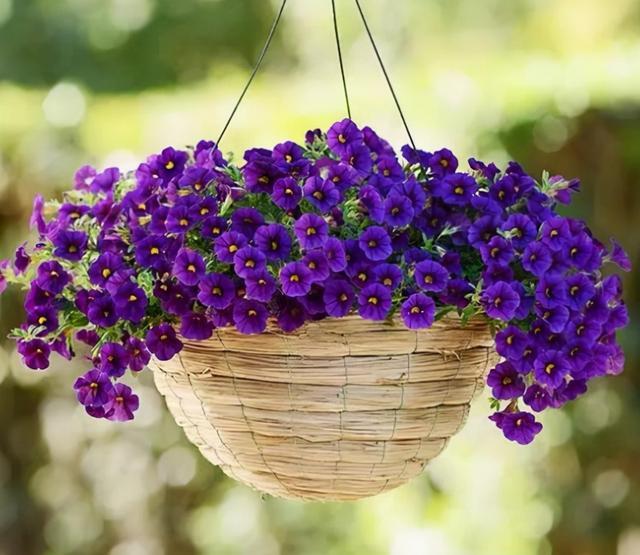 """种花卉,吊起来养,好看不占地方"""""""