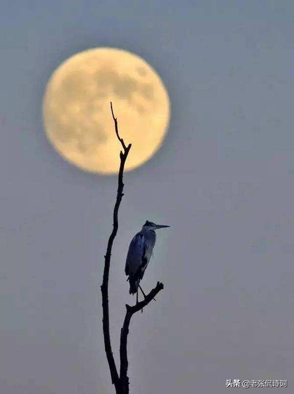 关于环境的诗,白居易一首不知名唐诗,可以作为保护动物、大自然的最形象作品