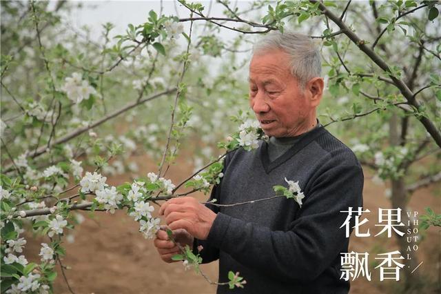 果业领路人的教诲:果树发展要多样化,适宜什么发展什么