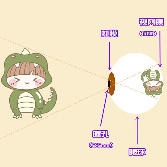 怎么做3d效果图,眼睛明明只能看到二维,为什么我们会有立体感?附3D图制作攻略