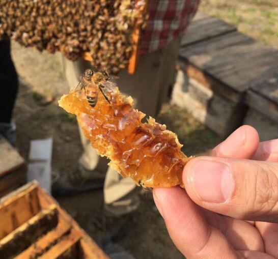 蜂 的吃法,蜂巢蜂蜜怎么吃啊?蜂巢蜜的吃法?