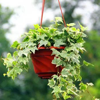 """0种家庭园艺花卉养护秘诀,以后养花不怕再养死了,值得收藏!"""""""