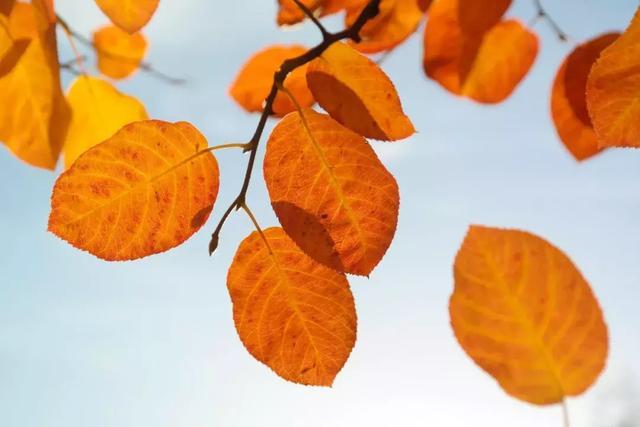 关于中秋节的成语,源自中华古典诗词:与秋天有关的18个最美成语