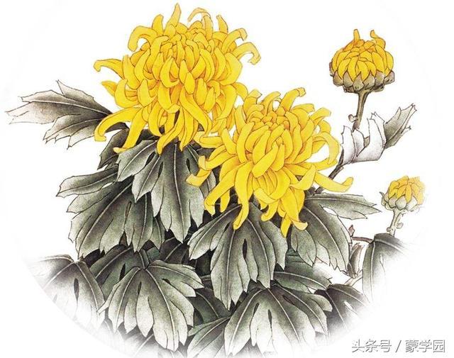 """关于花的句子,花谢花飞花满天,50句带""""花""""字飞花令古诗词,总有一句动心绪!"""