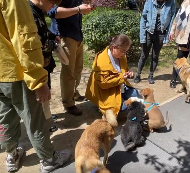 4隻流浪狗入職阿里,如今一年過去了,它們怎麼樣了? 家有萌寵 第6张