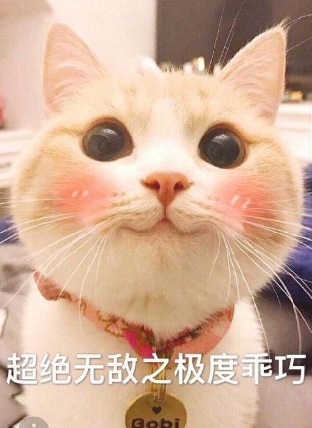 """猫咪品种大全及图片,最受欢迎的6种猫,2021猫咪""""爆款之王""""是谁?"""