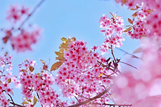 美好祝愿的简短句子,2021年最美立春祝福语,经典暖心,祝福满满