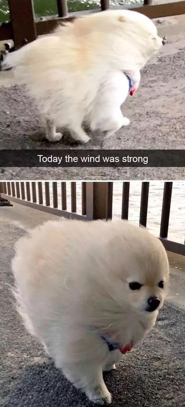 小狗图片,外国网友选出狗狗的经典图片,每张都能把你笑到变形