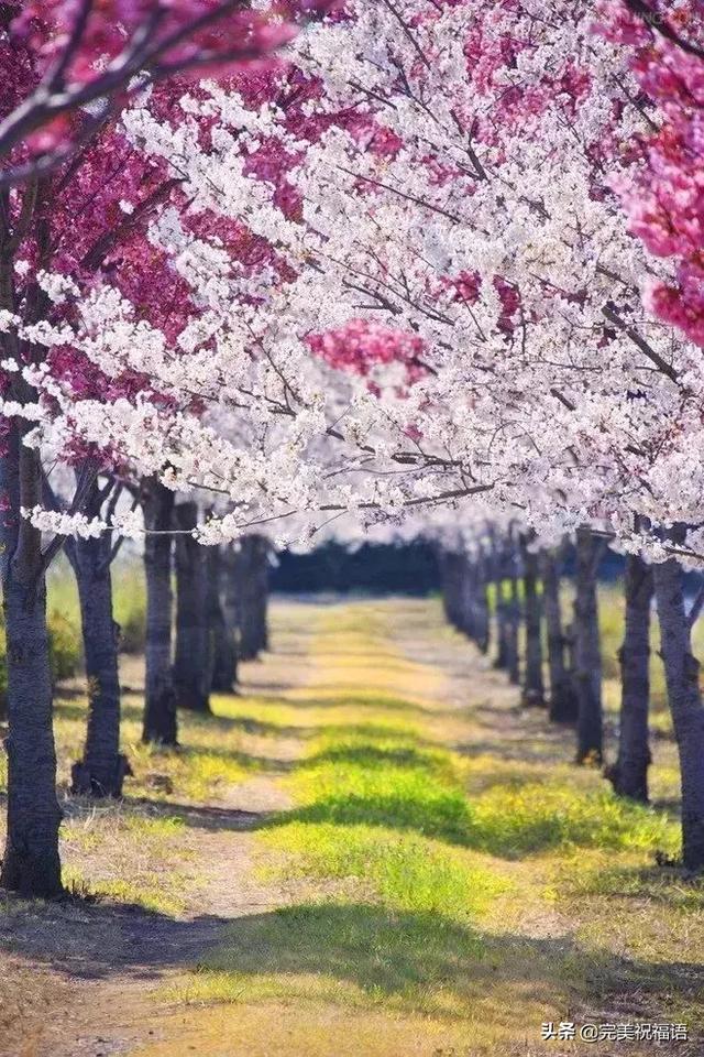 形容青山绿水的短句子,春光无限,美若仙境