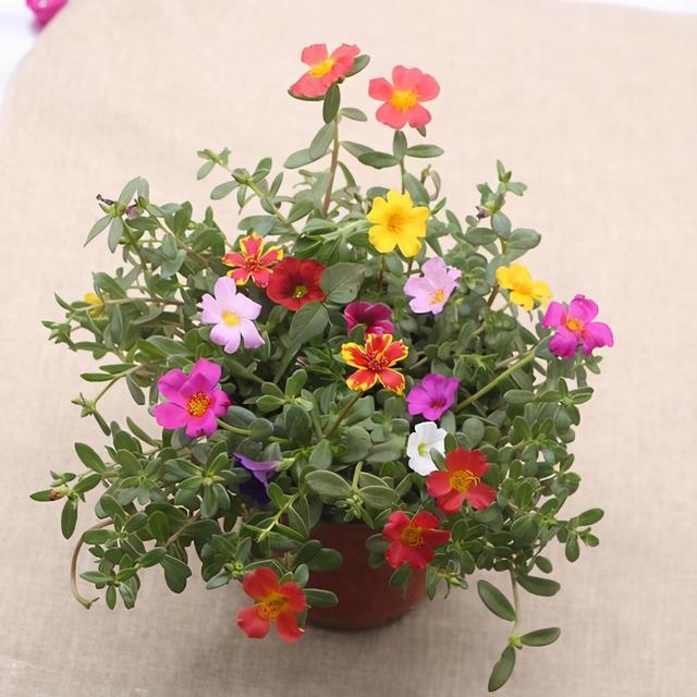 花卉养殖,适合养花新手养的5种花,不仅好看又好养