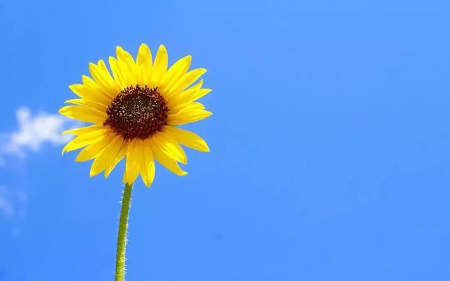 描写安静的句子,【写作素材】描写阳光的优美语句集萃!