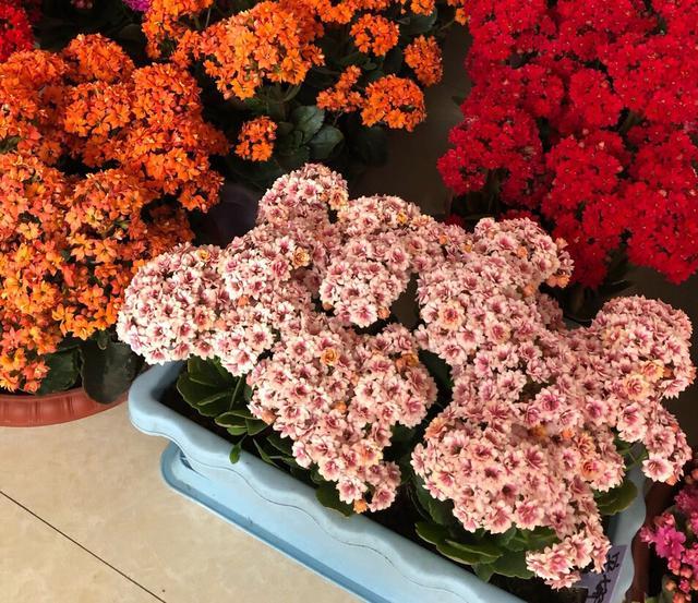 家庭养花,4个小技巧,变养花高手,君子兰吊兰虎皮兰都能养得旺