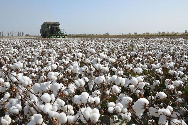 英国,欧盟国家,我国等逐一结局,因此新疆棉事情我觉得不单是仅