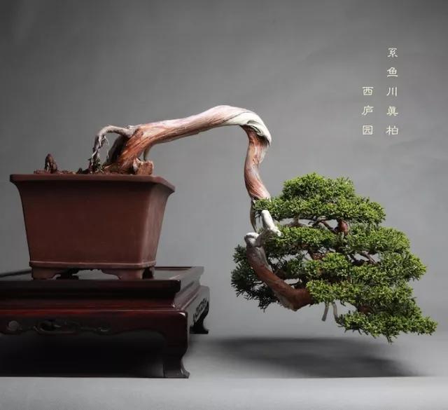 树的知识,园林设计需要用到的景观树知识大全