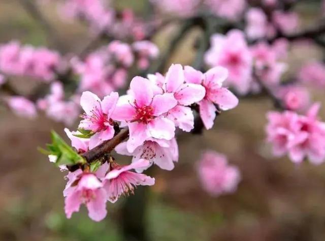 """花 的吃法,6种花做了7种""""菜"""",从李子柒来看哪些花卉能吃"""