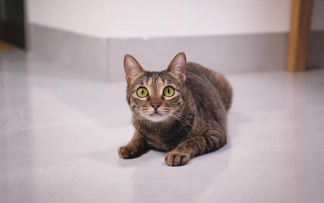 狸花貓被困37天,奇跡生還,被救時只有2斤,它是怎麼活下來的 家有萌寵 第1张