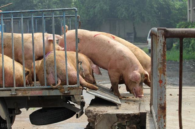 """3月26日生猪价格持续保持""""跌多涨少""""的趋势"""
