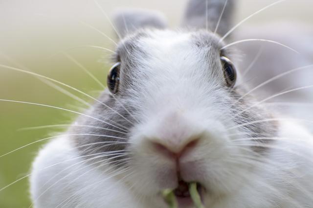 """兔成语,成语新解,""""守株待兔"""",诙谐幽默,看官进来呀"""