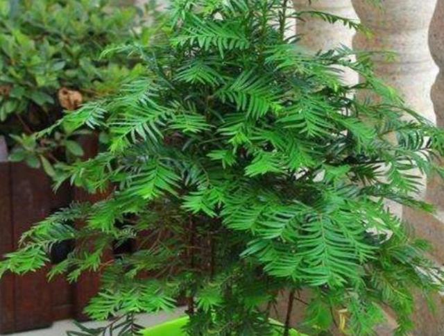 """种植物,能净化空气,养在室内美观大方"""""""