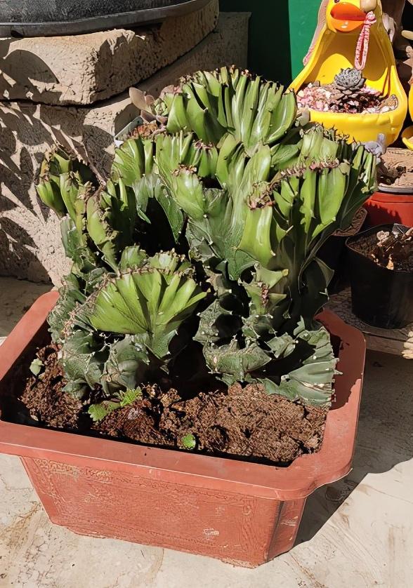 """长相""""奇葩""""的植物,虽然丑,但是特有安全感"""