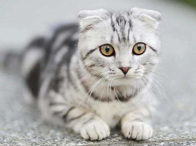 """猫的英文是cat,那""""小奶猫""""的英文是啥?总不能说little cat 吧"""