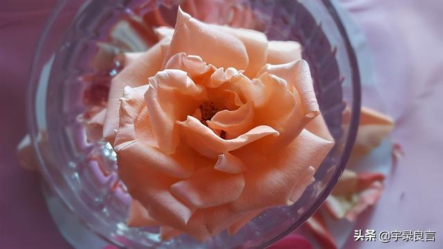唯美心情短句,治愈心情的经典句子,精致唯美,句句暖心