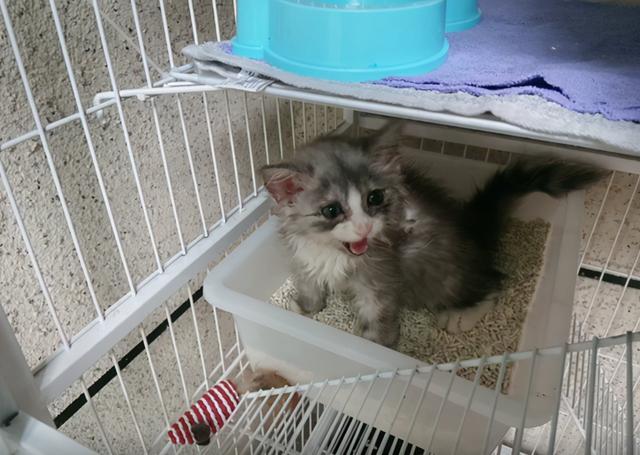 別人要安樂的貓,被我撿了回來,8個月後,這顏值不虧 家有萌寵 第6张