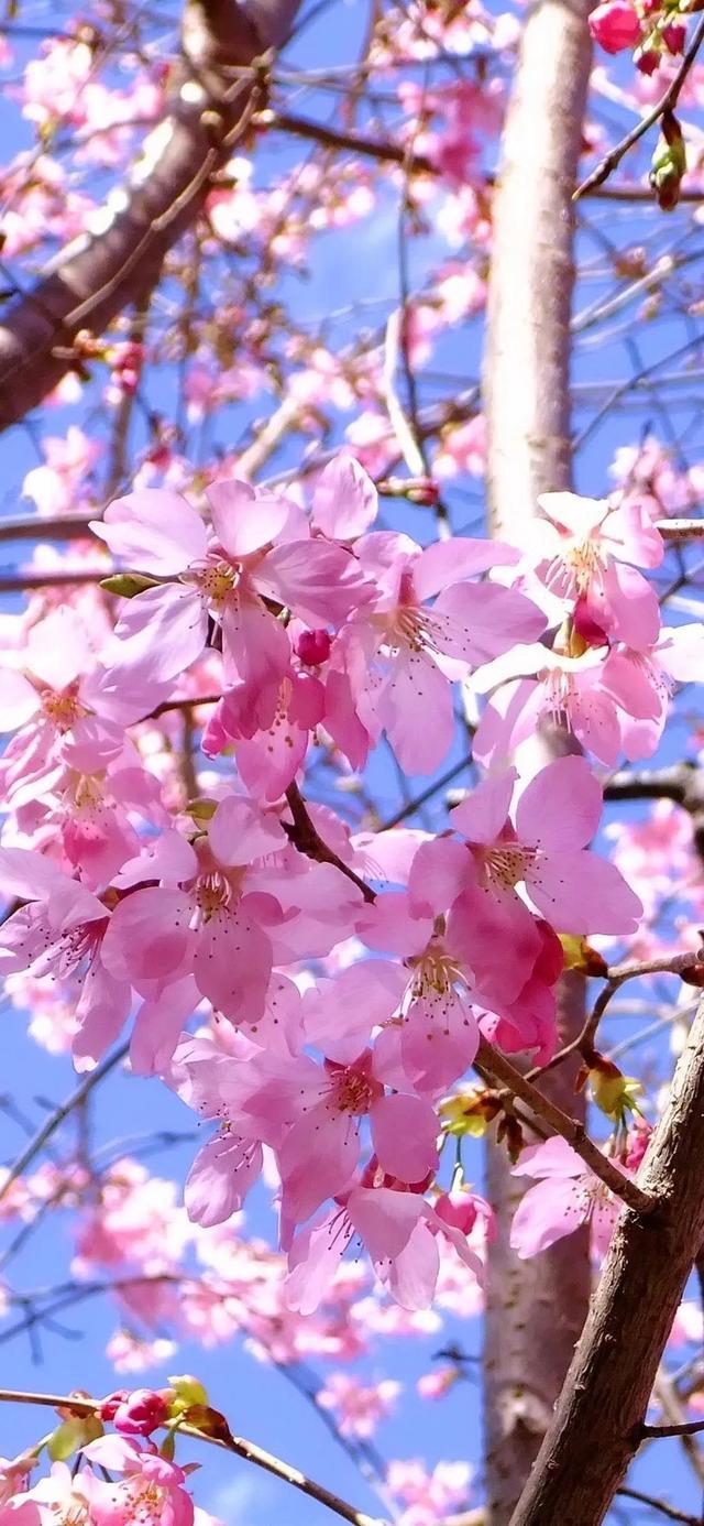 花图片,4月,最佳赏花时间,漂亮花卉图片,出去赏花
