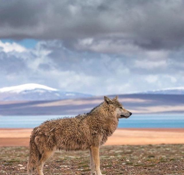 野生动物有哪些,我国境内最新拍摄到的十一种野生动物活动画面